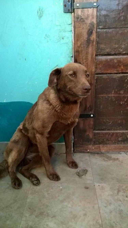 Грустная собака сидела в приюте 2 года, пока вдруг не учуяла знакомый запах