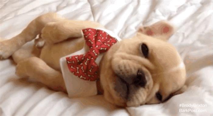 20 собак устроившихся в кровати хозяина