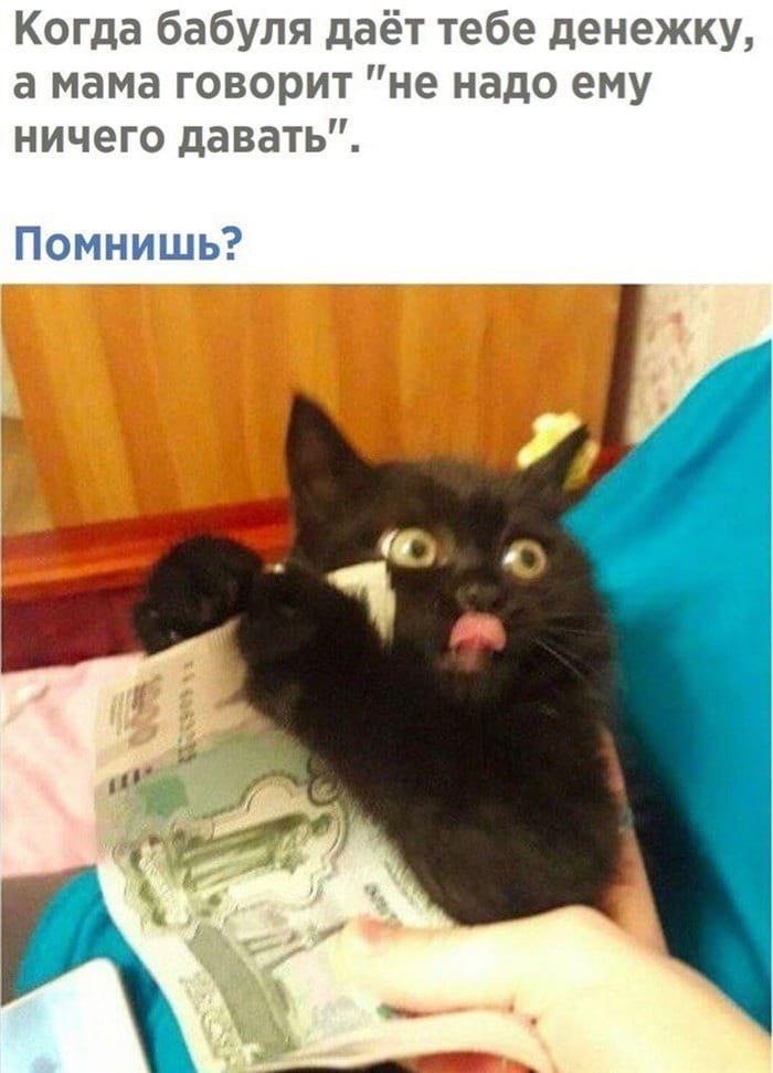 13 смешных мини-историй в картинках про котиков