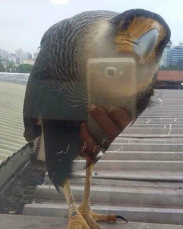 А это не птица, делающая селфи