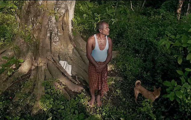 Это место стало домом для множества животных. Таких как бенгальские тигры и индийские носороги.