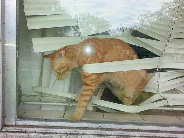 И кот, который плевать хотел на эти ваши жалюзи: