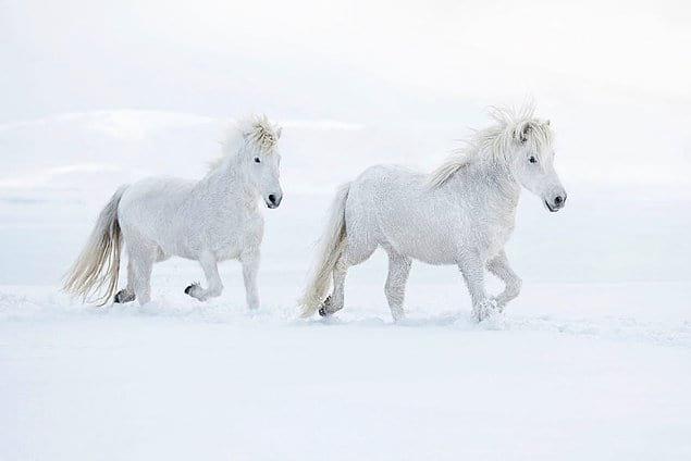Как в фантастическом фильме: серия фото Дрю Доггетта о грациозных лошадях и исландских пейзажах