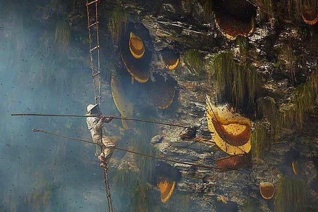 Как вам размерчик этих медовых сот в Непале? 🍯🐝