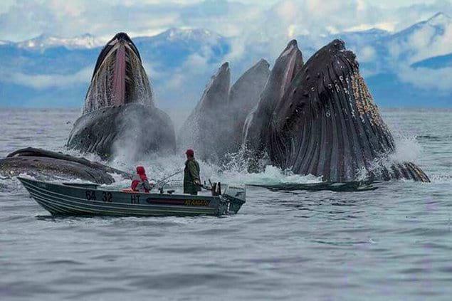 Киты на фоне этой маленькой рыбацкой лодки выглядят просто божественно!