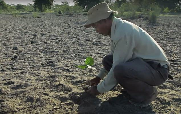 Когда Джадав был еще молодым, он наткнулся на большое количество змей, которые умерли от жары после того, как бушующие наводнения вымыли их на безлюдную песчаную отмель.