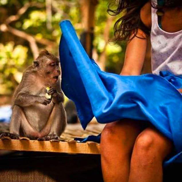 Конечно юбка, развивающаяся на ветру, не могла не привлечь внимание этой милой обезьянки 🙈