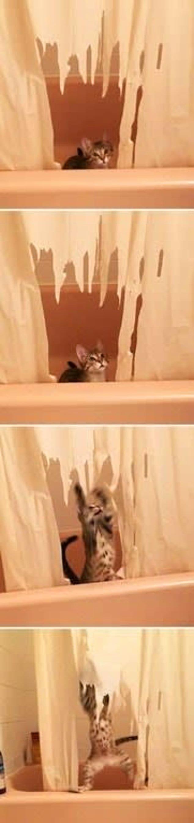 Котенок, работающий по принципу шредера для занавесок в ванной:
