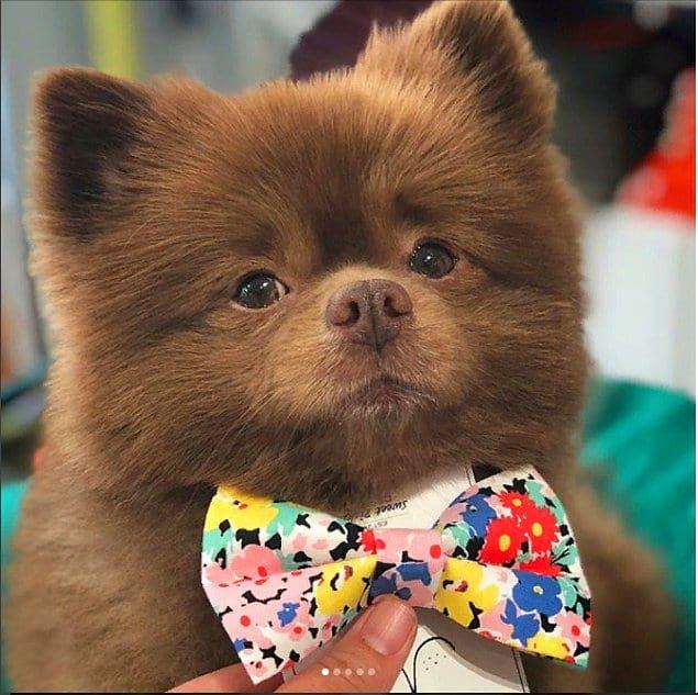На аккаунте пса можно увидеть его самого в милых галстуках-бабочках, принимающим роскошные ванны и просто отлично проводящим время.