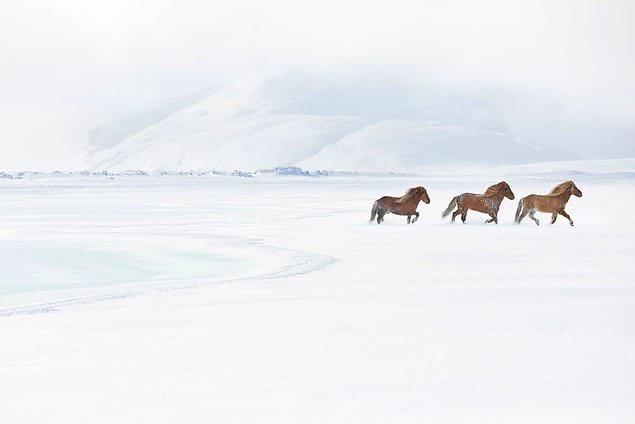 На фотографиях запечатлены исландская природа и лошади.