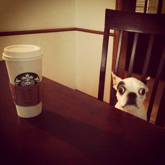 """Не давайте собаке кофе, иначе вы можете ее """"сломать"""", как это и произошло на данном фото:"""