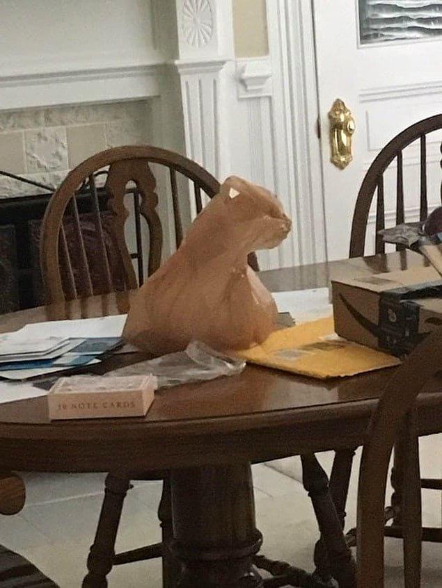 Нет, и это не кот, сидящий на столе, а всего лишь пакет 🤔