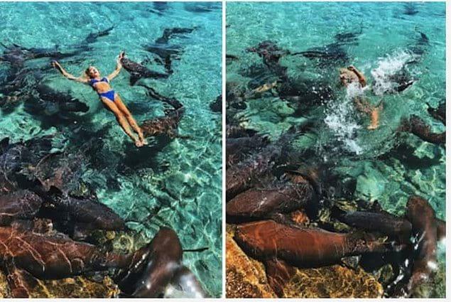 Но несмотря на полную уверенность в безопасности данного мероприятия, в процессе съемок одна из акул схватила девушку за руку!