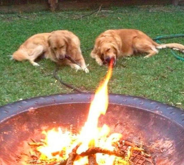 Видели когда-нибудь огнедышащих собак? Мы - да!