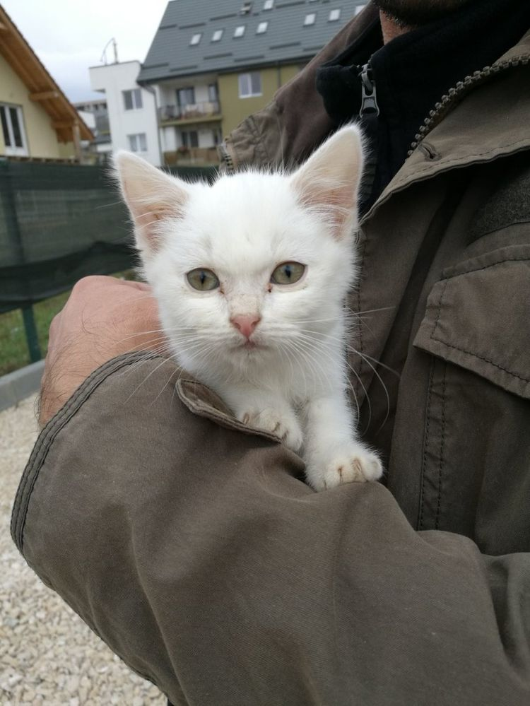 Семья хотела взять из приюта котенка для маленького щенка, но котенок их ждал на улице