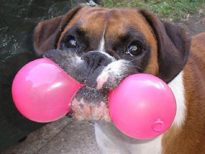 20 фотографий немного странных собак