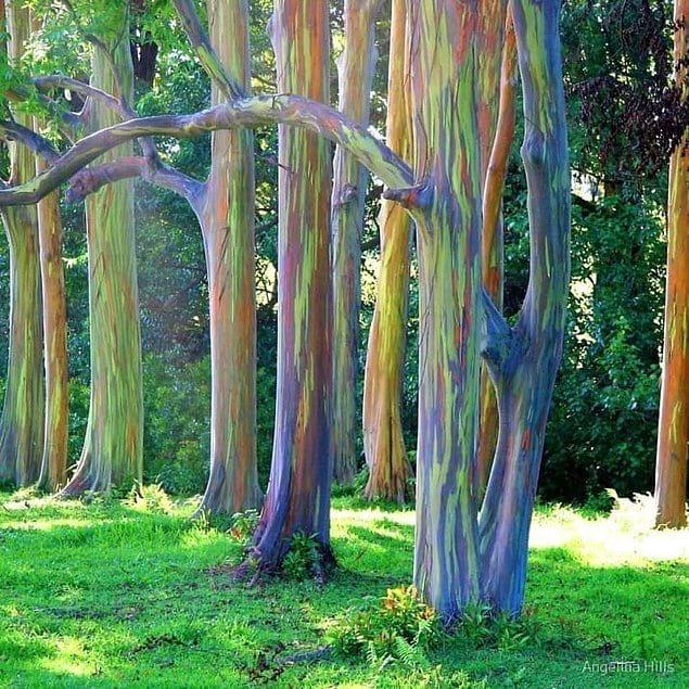 А иногда создает деревья так, будто они только что вышли из сказки про зачарованный лес