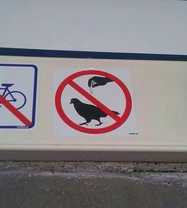 Больно осознавать, что мы больше не можем приправлять голубей ?