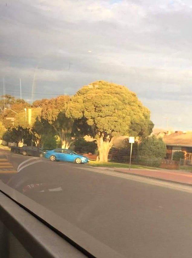 Деревья словно гигантские брокколи. Почему бы и нет?