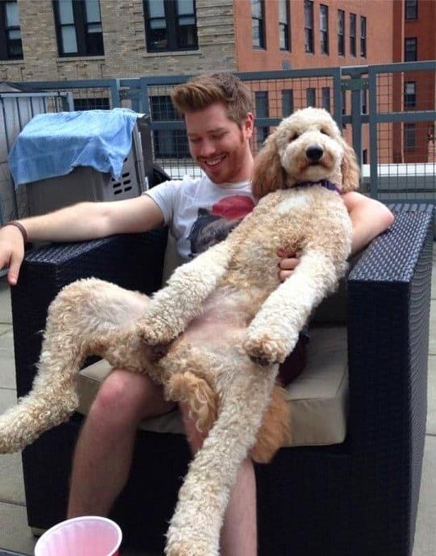 Этот пес уверен, что он самый крутой парень на деревне.