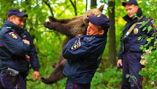 Хм, охота на медведя?