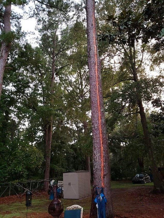 Или идеальное дерево: