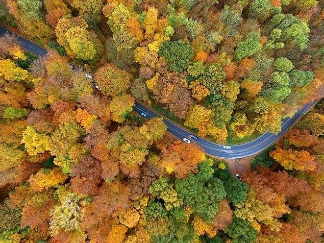 Осенний лес в Кельне, Германия.