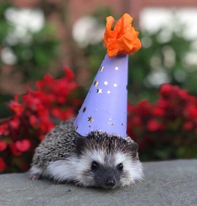 Первый день рождения Генри.