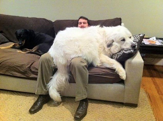 Повернется ли у вас язык назвать этого гиганта собакой?!