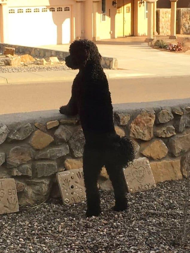 Повесить сумочку на плечо - и будет вылитая девушка!
