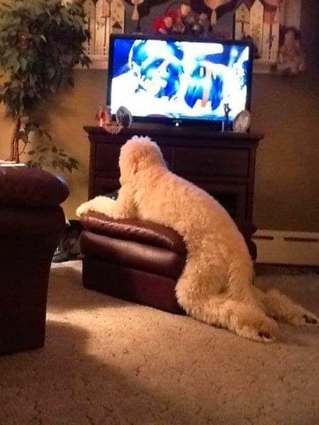 Собаки, почему вы прикидываетесь людьми?!