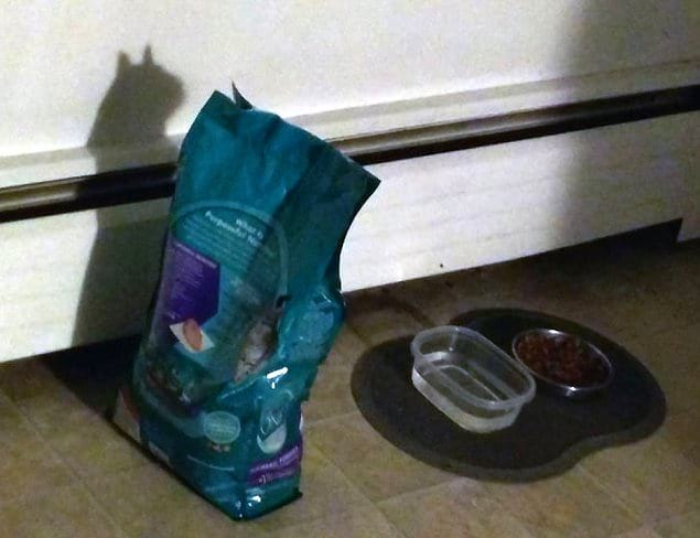Сразу понятно, для кого купили корм.