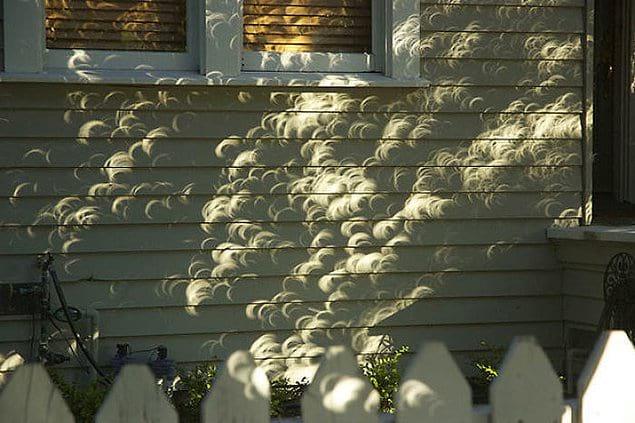 Тени листьев во время солнечного затмения.