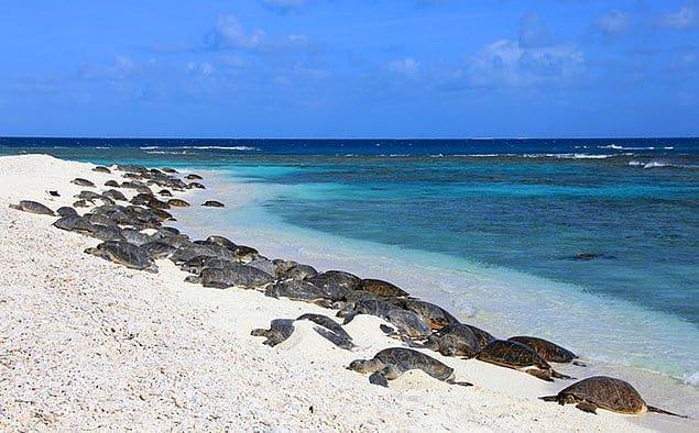 """""""У меня выступили слезы, когда я увидел, как черепахи снова идут к океану"""", — делится Афроз"""