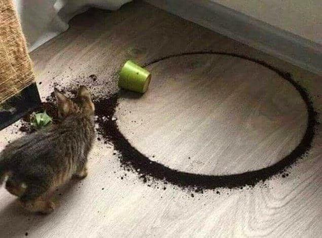 Вы верите вообще, что растение может упасть настолько идеально?