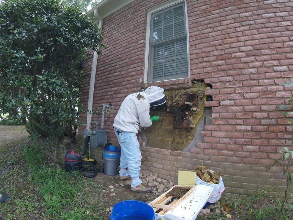 Жители дома жаловались на пчёл в стене. Приехавший специалист нашёл там целый пчелиный мегаполис