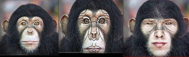 Бонус: обезьяна! :)