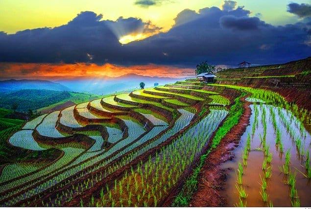 Даже и не скажешь, что эти рисовые поля во Вьетнаме настоящие...