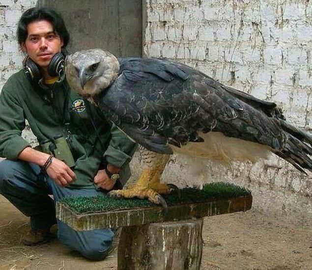 Этот орел действительно привлекает внимание, не так ли?!