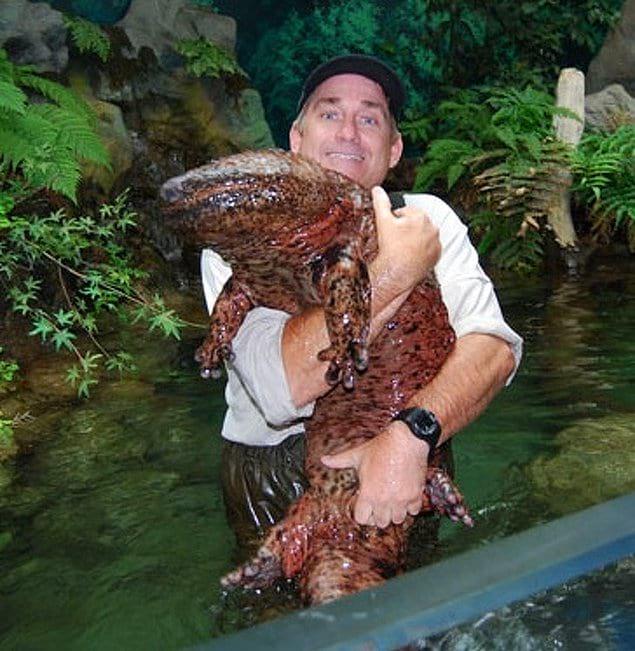 Этот парень нашел огромную саламандру!