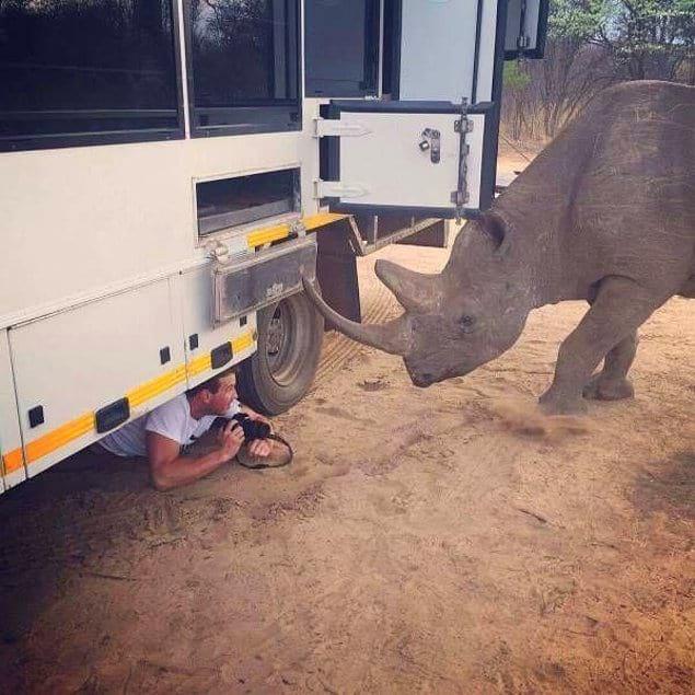 """Хотите фоточку носорога? Сначала нажмите кнопочку """"Сохраниться"""""""