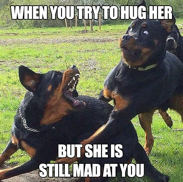 Когда ты пытаешься обнять её, но она все еще обижена на тебя.