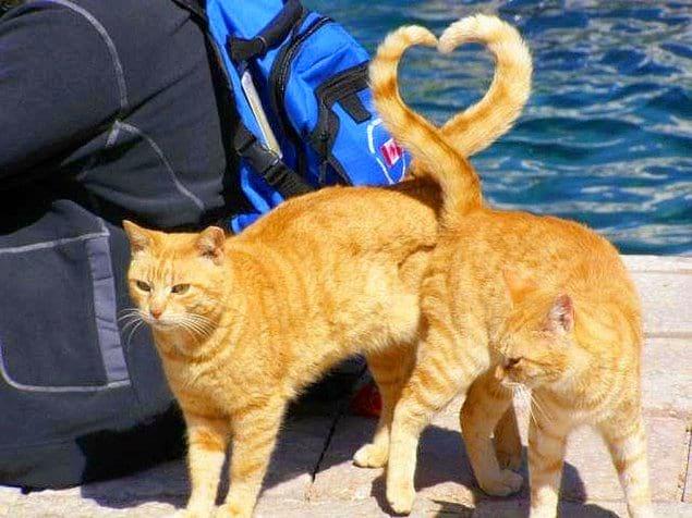 Кошки точно знают, что такое любовь
