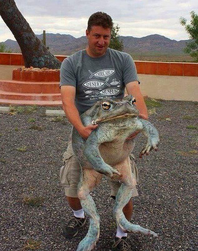 Кто знал, что лягушки могут быть такими большими!