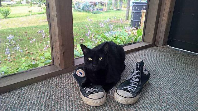 Наш кот не гадит в туфли – он брезгливый.