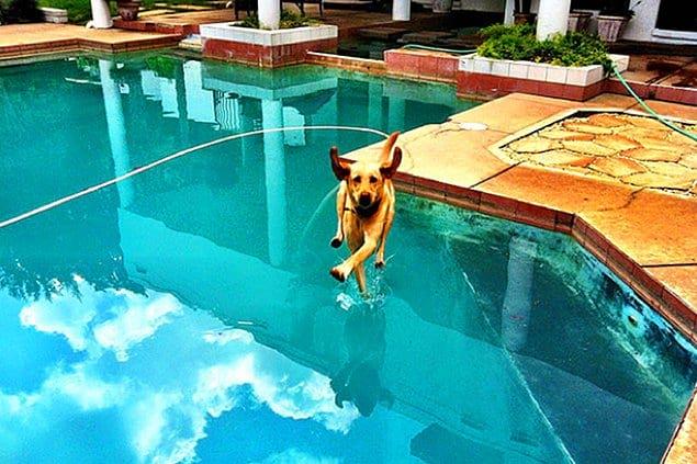 Ого! Да это же ходящая по воде собака!