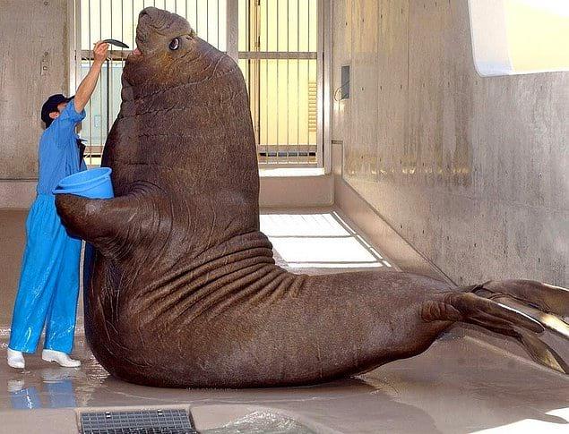 Представьте, что это вы стоите рядом с этим тюленем!