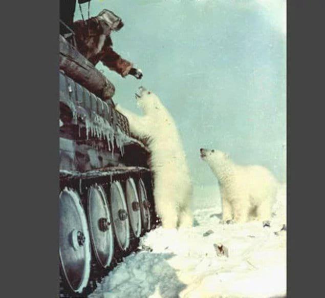 Русский солдат кормит белых медведей