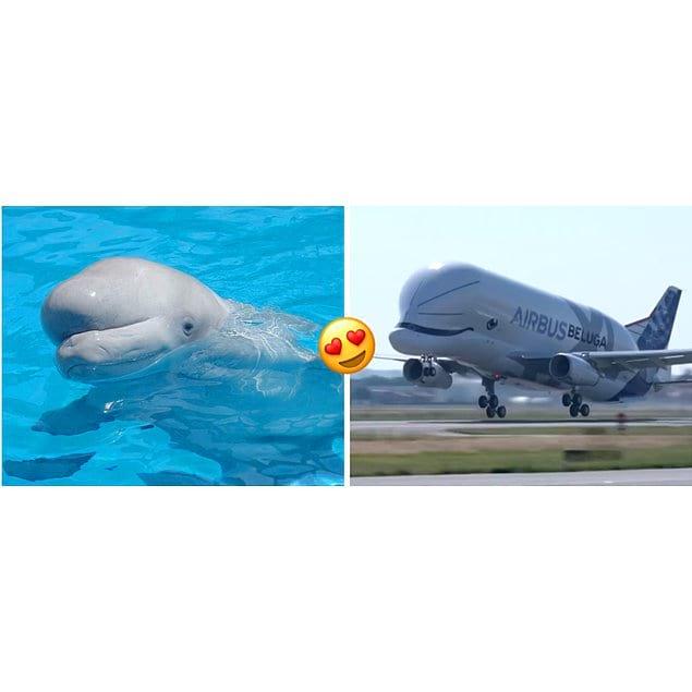Самолет назван в честь кита белухи. Ну разве они не похожи?!