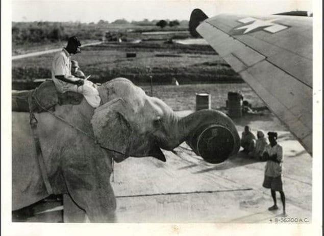 Слон, помогающий в строительстве самолета